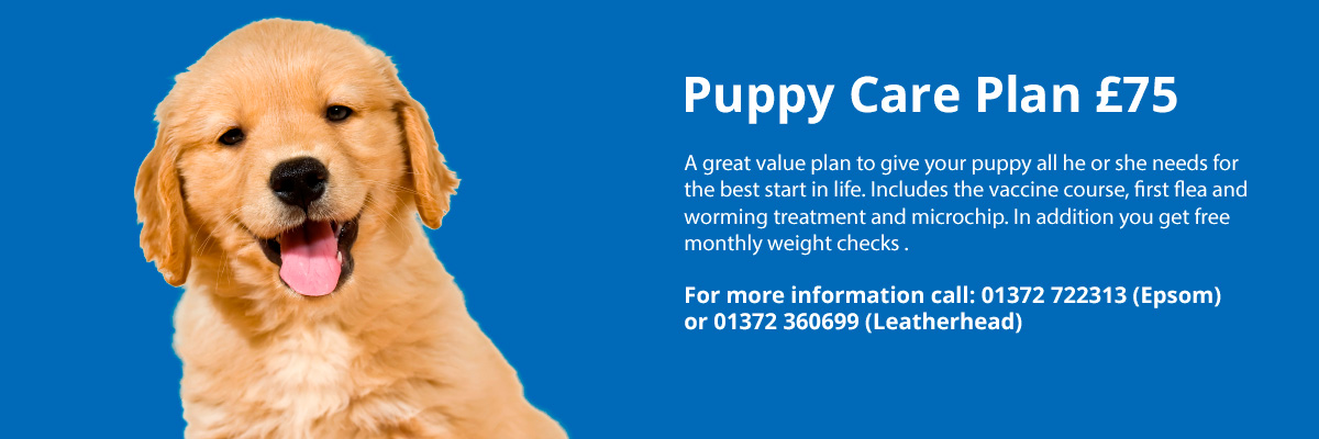 Winton Lodge Vets in Epsom, Puppy Health Plan