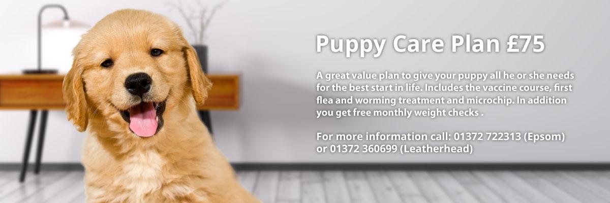 vet epsom puppy care plan
